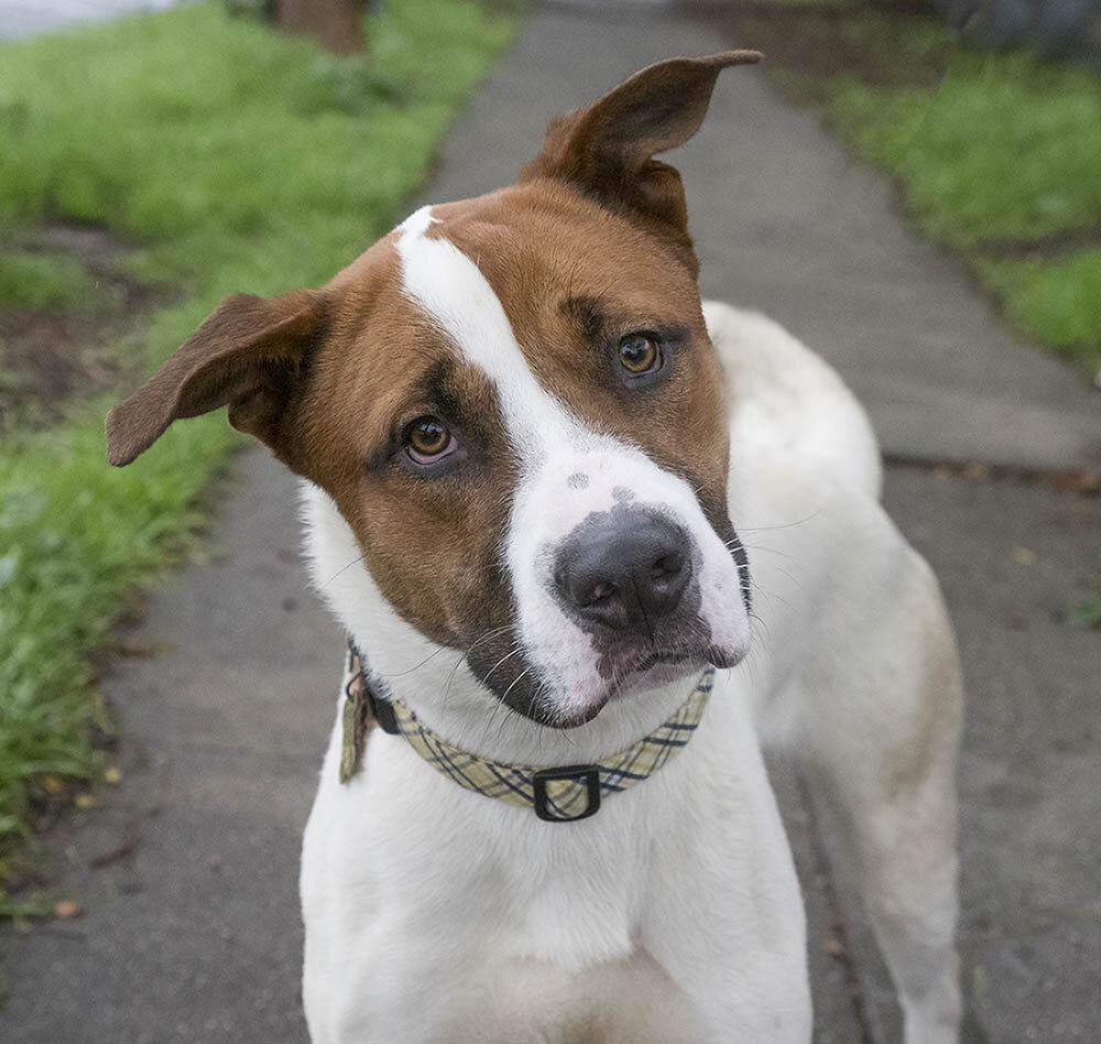pet adoption application