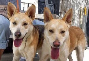Milo adoptable dogs