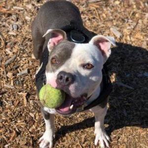 Milo Sanctuary Dog