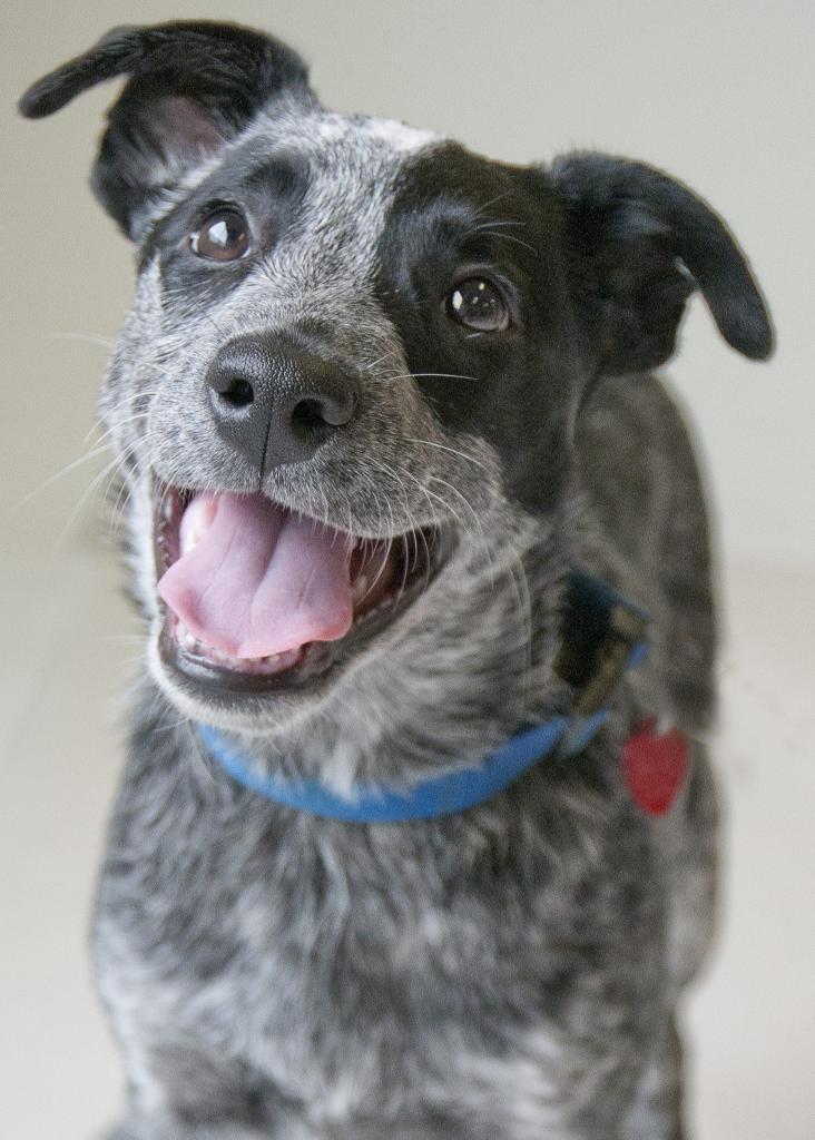Milo Pet Foster Program